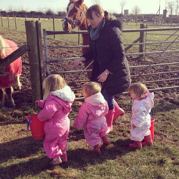 feeding the horses croft-farm-pembrokeshire www.minitravellers.co.uk