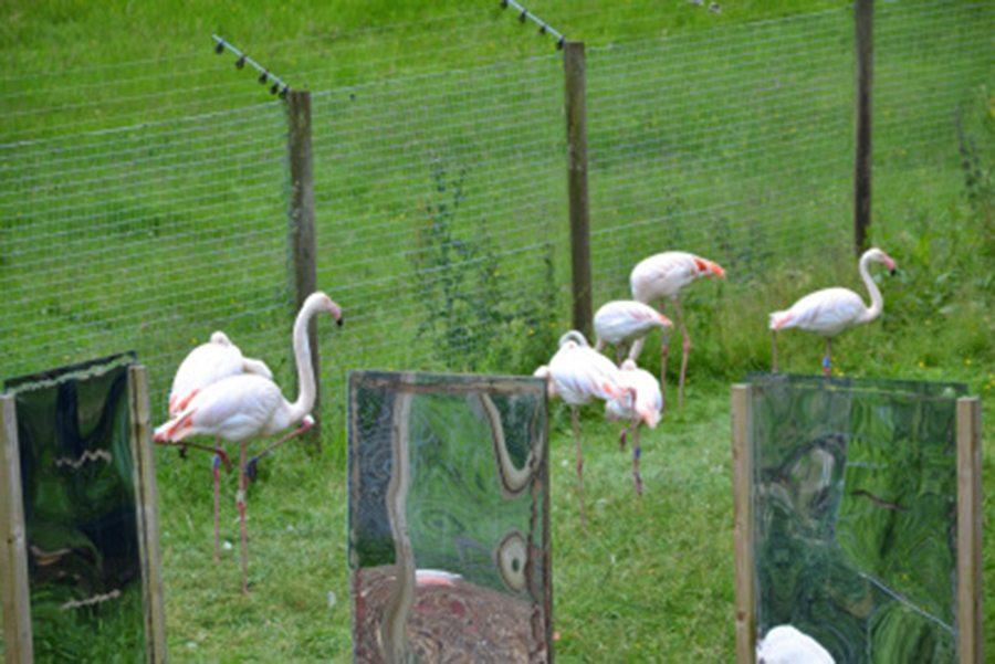 flamingoes marwell-wildlife-winchester-wildlife-everywhere-www.minitravellers.co.uk
