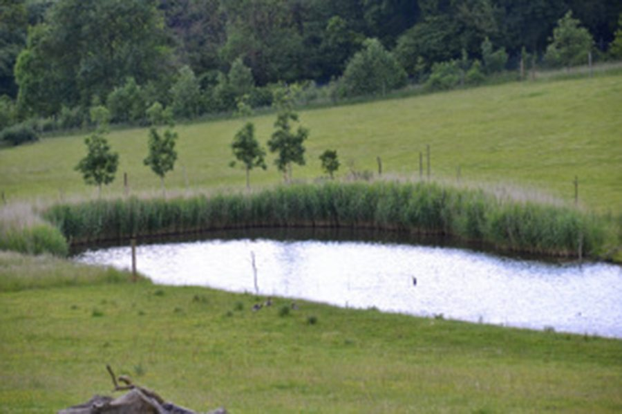 lake at marwell-wildlife-winchester-wildlife-everywhere-www.minitravellers.co.uk