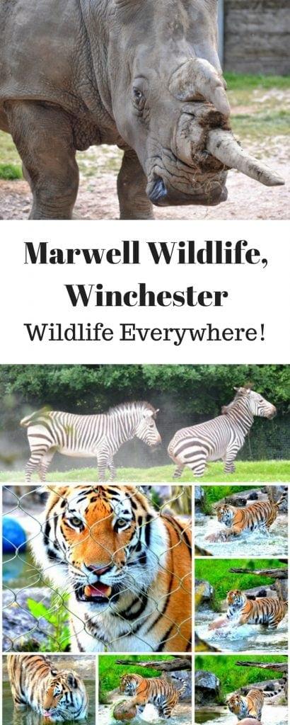 PIN Marwell Wildlife,Winchester www.minitravellers.co.uk