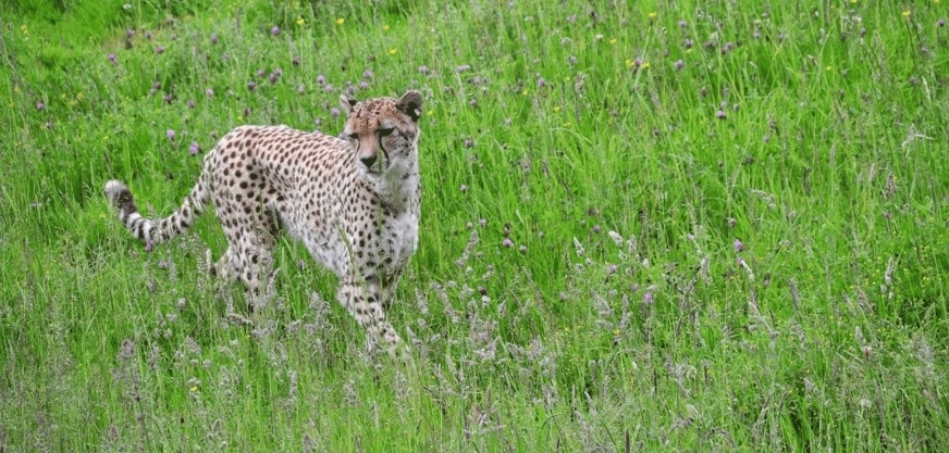 Marwell Wildlife, Winchester – Wildlife everywhere