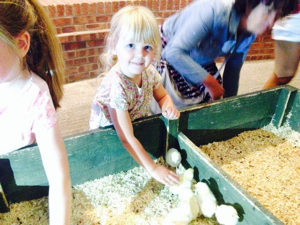 Mini Travellers -Farmer Teds in Ormskirk
