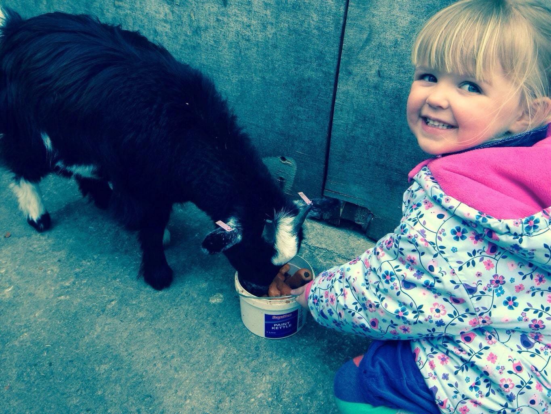 Reddish Vale Animal Farm, Stockport