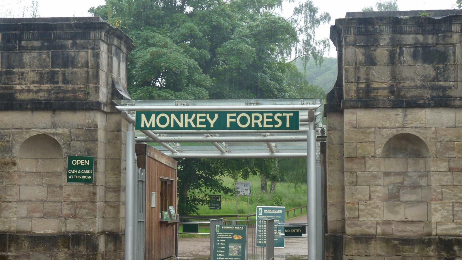 Trentham Monkey Forest, Stoke