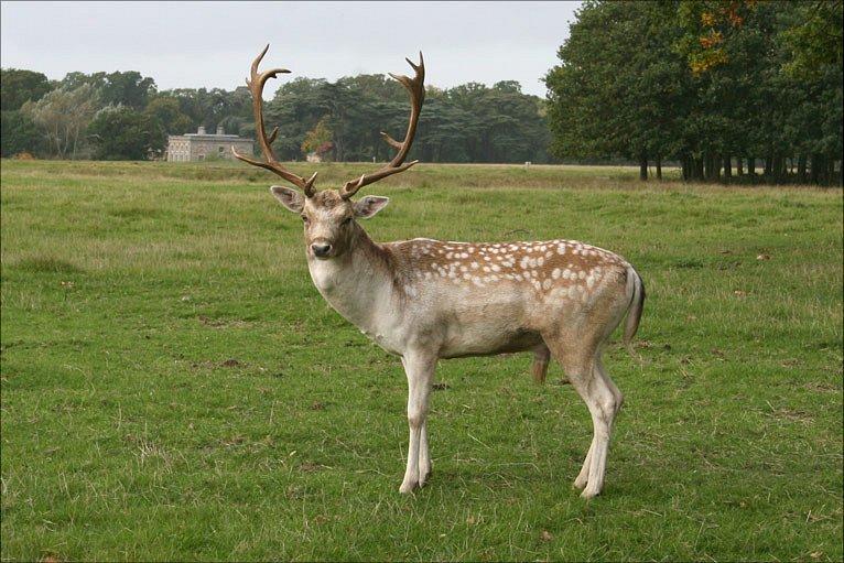 Attingham Park, Shrewsbury