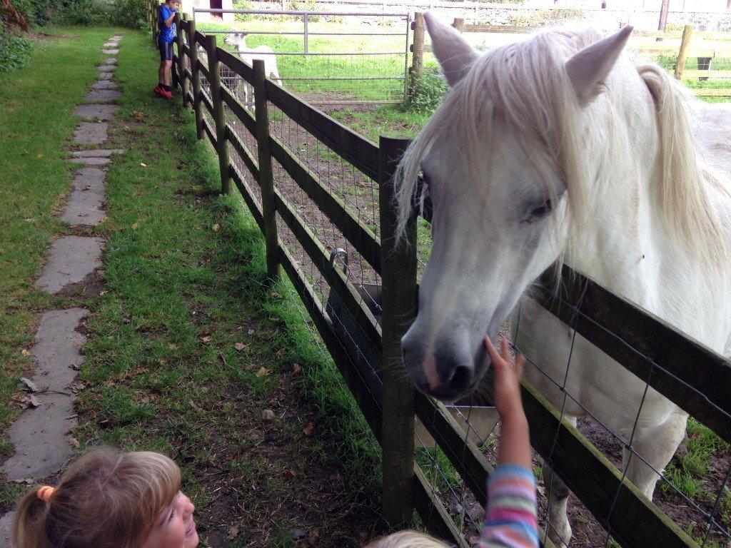 Gwynfryn Farm, Pwllheli, Llyn Peninsula www.minitravellers.co.uk