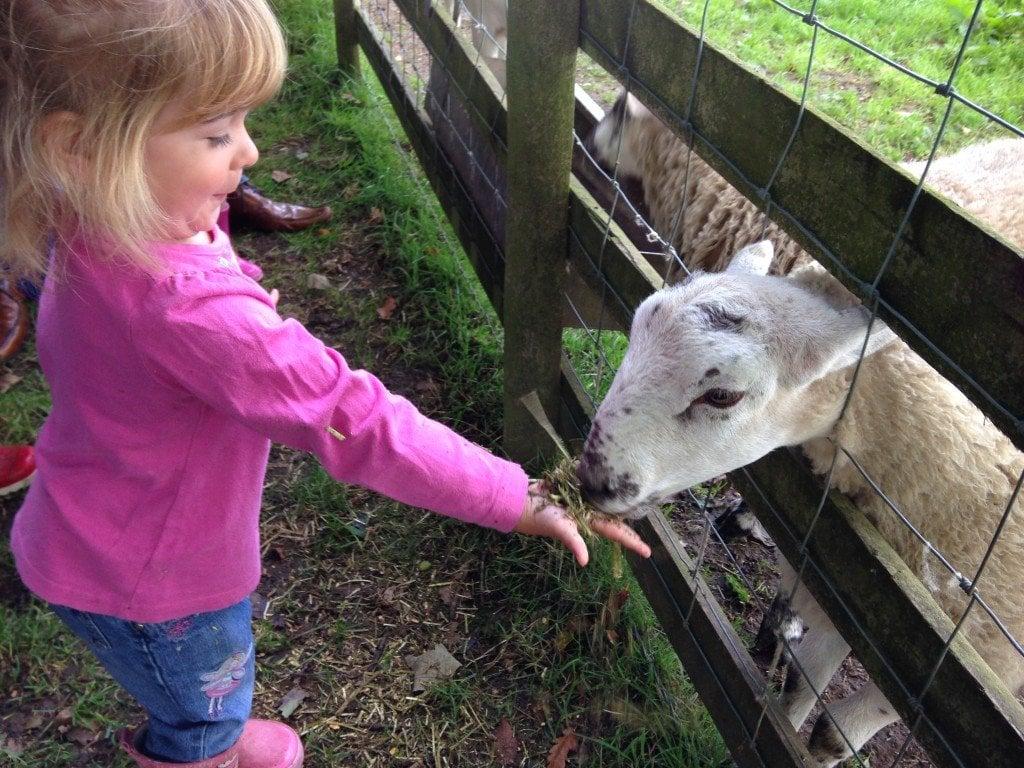Gwynfryn Farm, Pwllheli, Llyn Peninsula