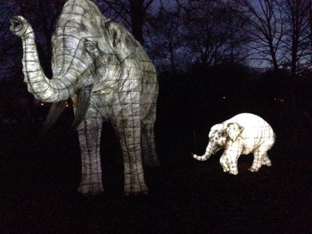 Lantern Magic, Chester Zoo