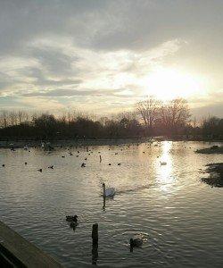 WWT – Wetlands for life – Slimbridge Wetland Centre