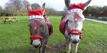National Trust Christmas Activities www.minitravellers.co.uk