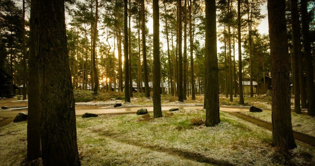 Center Parcs Woodland
