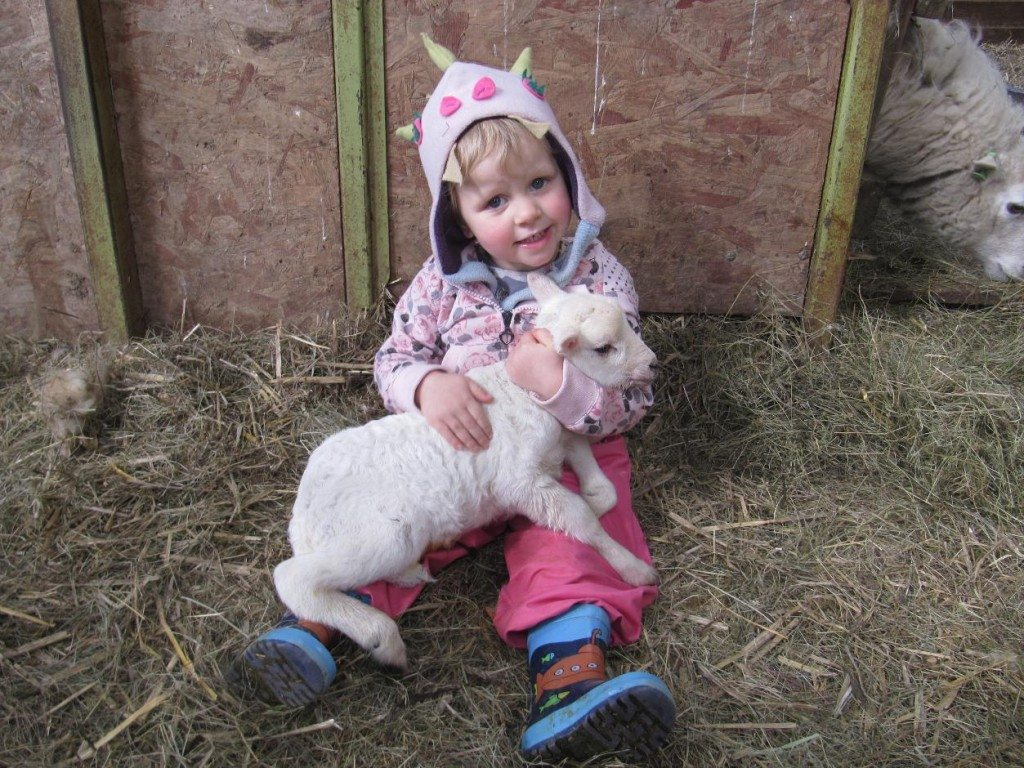 Nannerth Country Holidays- Farm Stay UK 3