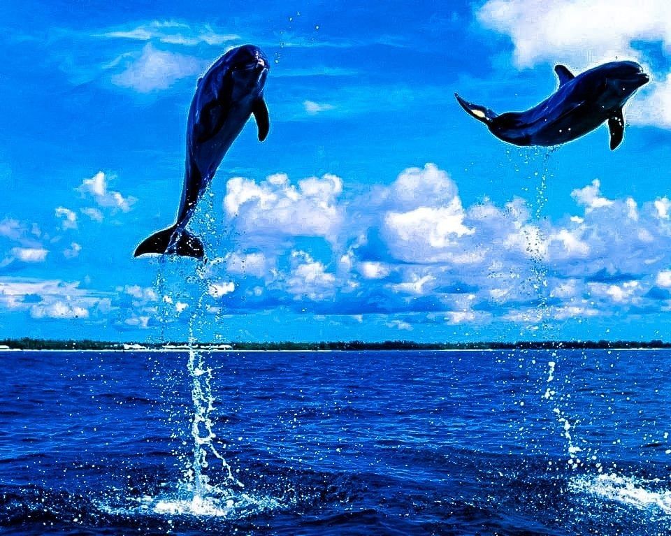 Dolphins Tamarin Mauritius with Kids