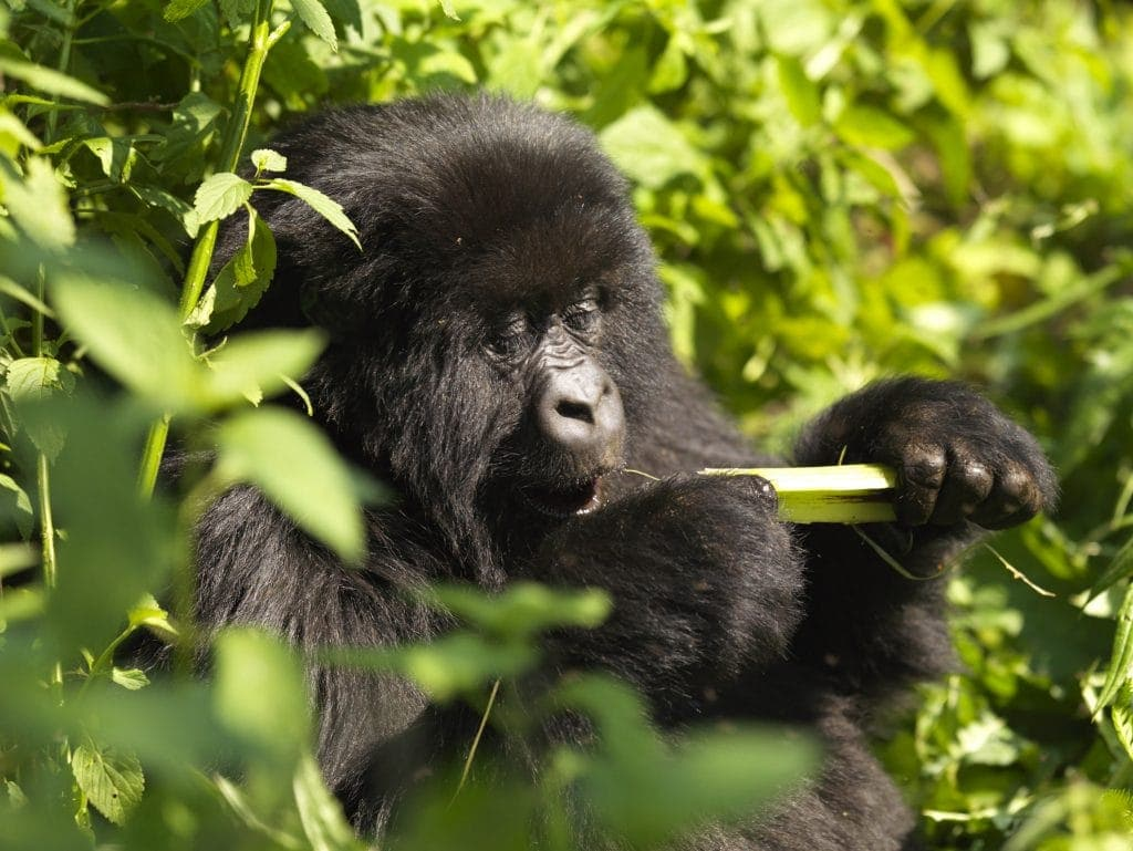 5 Reasons We Are Visiting Rwanda With Kids