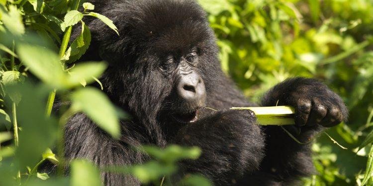5 Reasons to Visit Rwanda with Kids www.minitravellers.co.uk