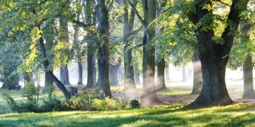 sunshine through the trees at marden hall park