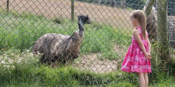 Noah's Ark Zoo Farm Review | Family Fun in Bristol www.minitravellers.co.uk