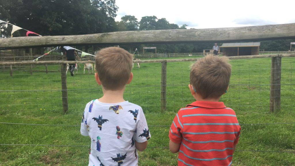 Willows Activity Farm Goat Racing