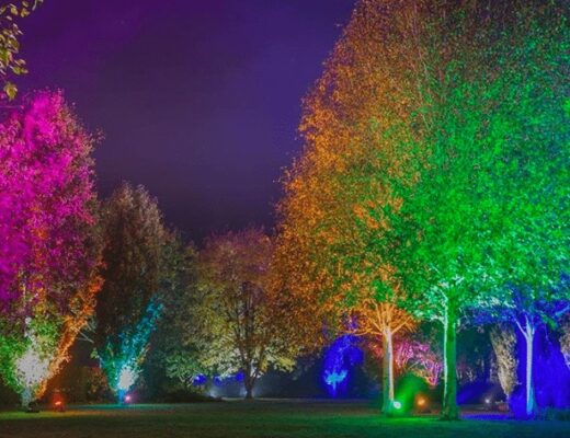 Christmas at Harlow Carr   Glow Winter Illuminations www.minitravellers.co.uk
