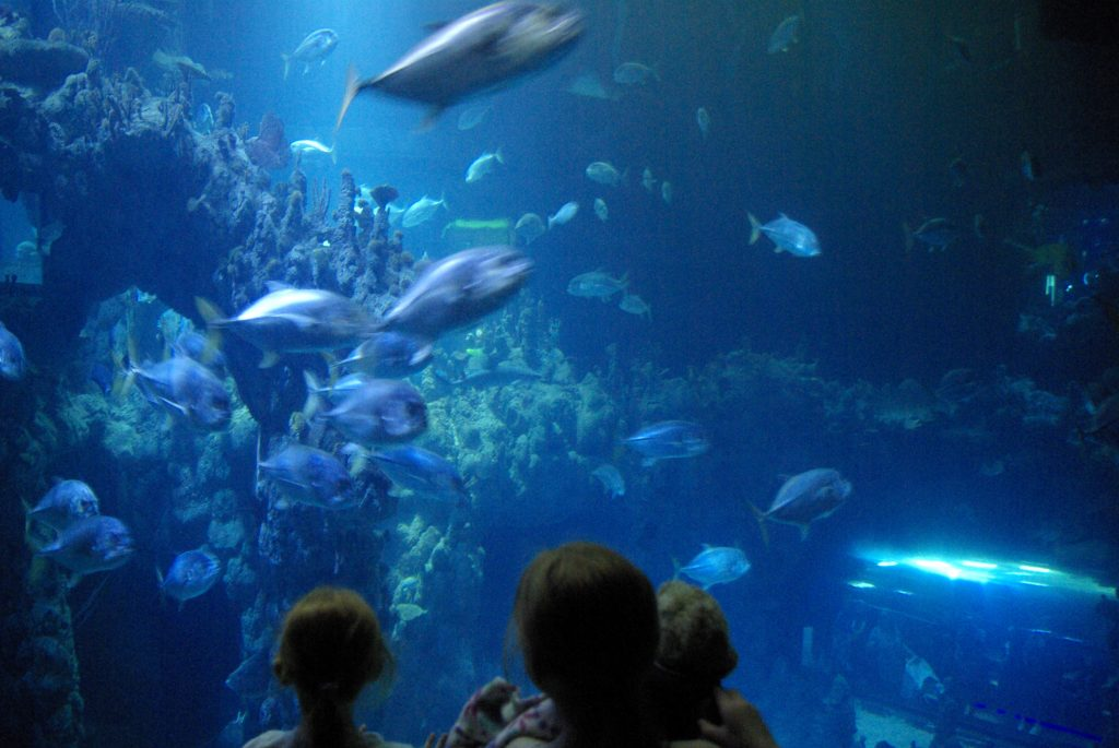 10 Things to do in Hull with Kids www.minitravellers.co.uk