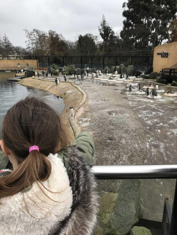 Mini Travellers A-Z of Edinburgh Zoo   Tips & Tricks