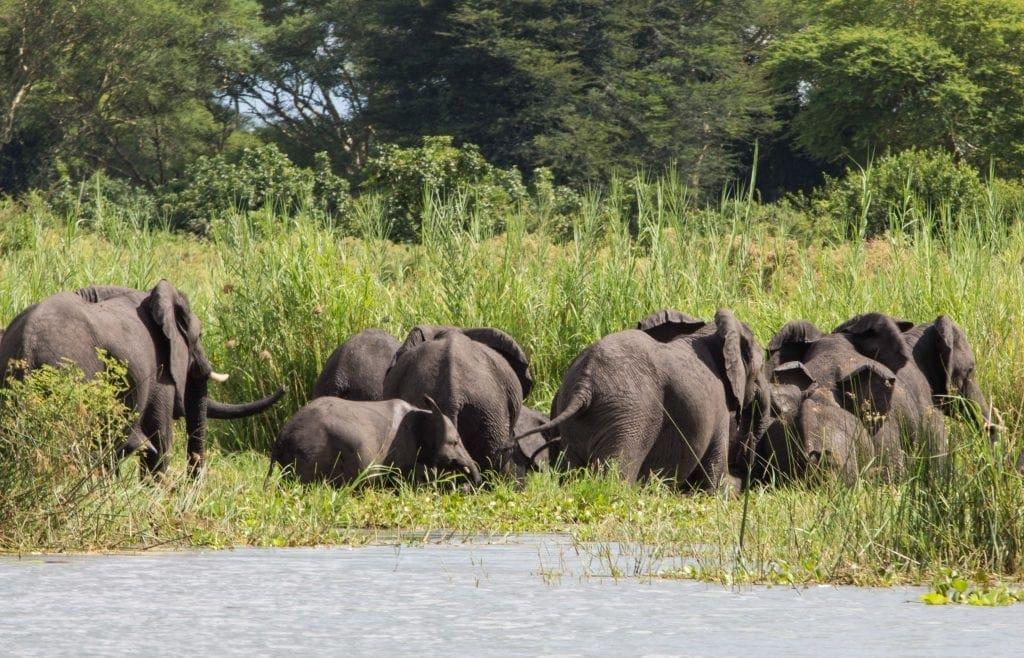 Mvuu Camp in Liwonde National Park | Best Safari in Africa?