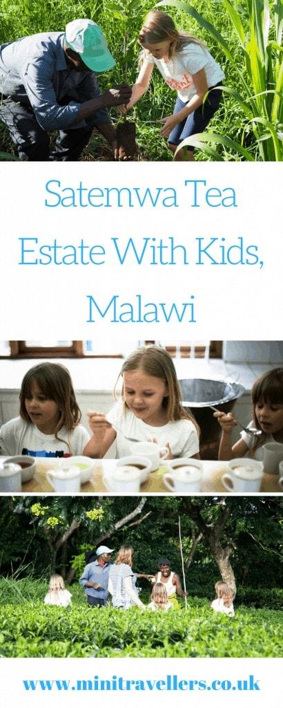 Satemwa Tea Estate With Kids, Malawi