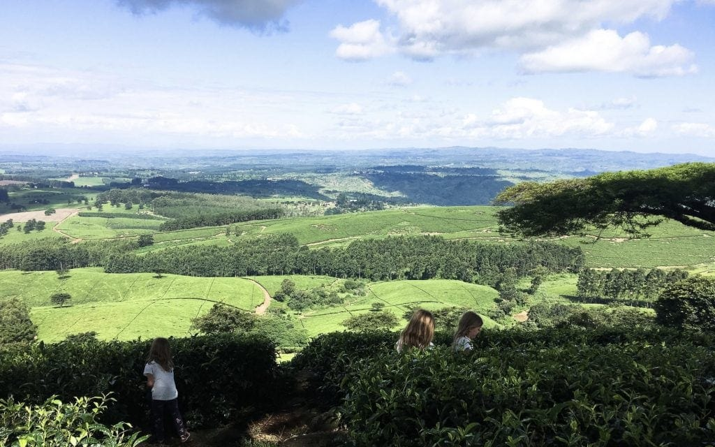 Satemwa Tea Estate with Kids