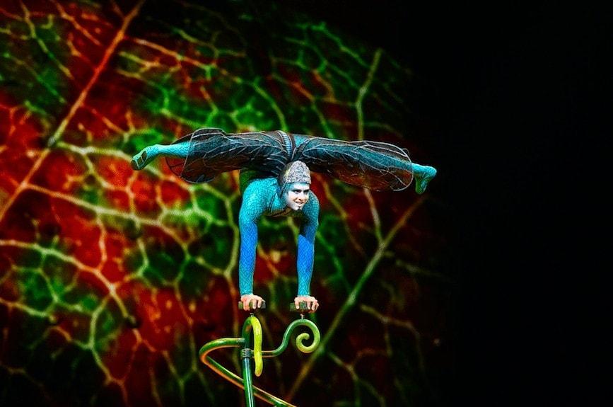 Cirque du Soleil Ovo Review