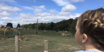 yorkshire wildlife park family ticket