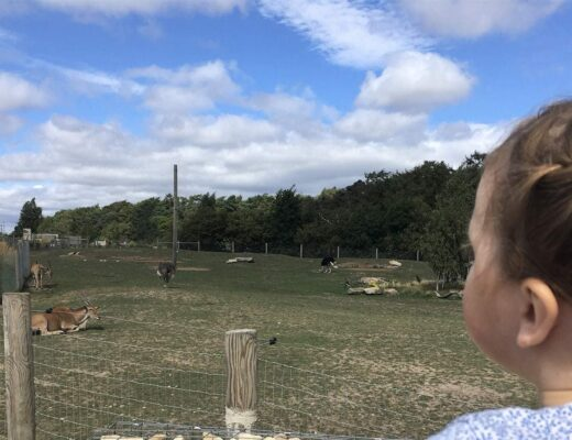 yorkshire wildlife park family ticket