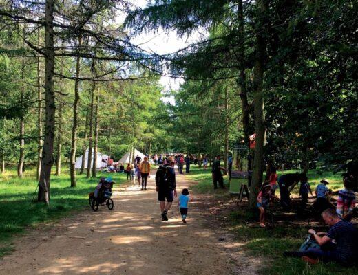 Into the Trees Festival   Family Friendly Festival