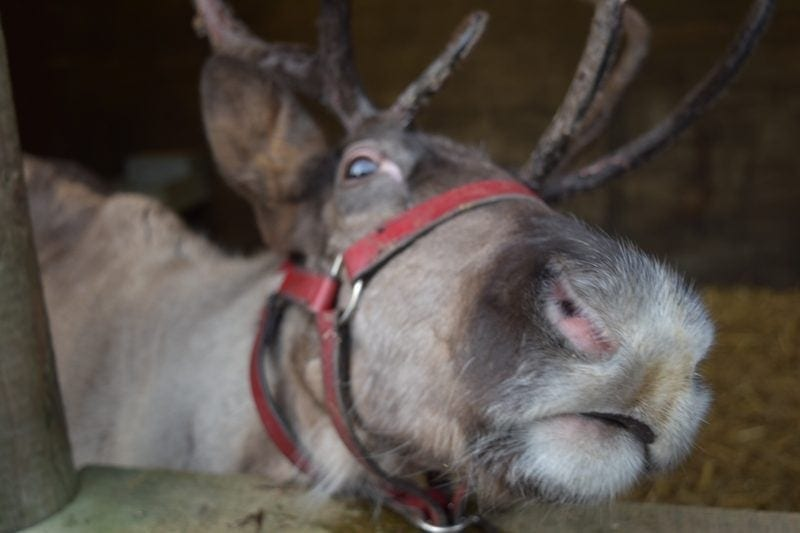 5 Places to see Santa in Staffordshire this Christmas