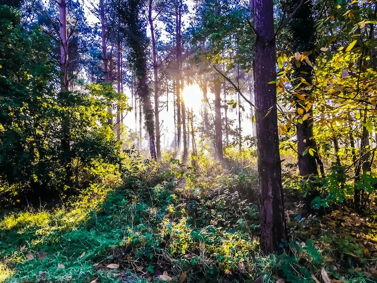October Half Term at Thorpe Forest Norfolk | Forest Holidays