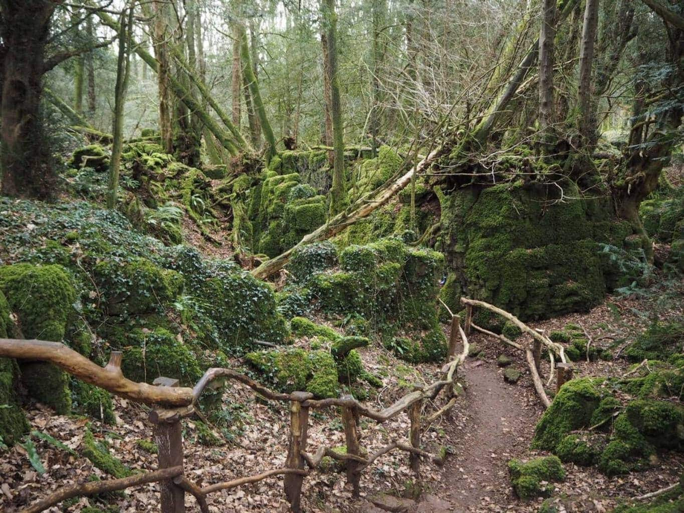 Review   Whitemead Forest Park in Gloucestershire