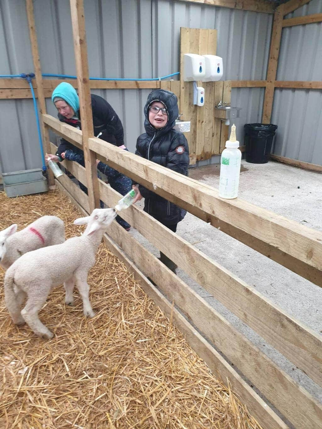 Review | Mrs Dowsons Farm Park near Blackburn Lancashire