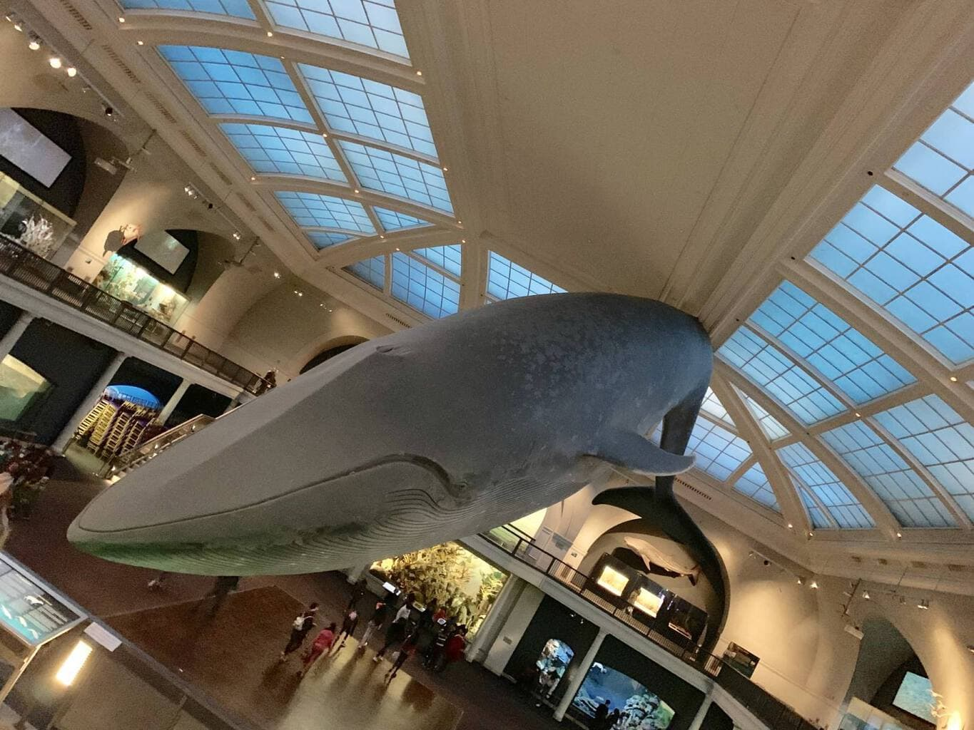 American Museum of Natural History Highlights
