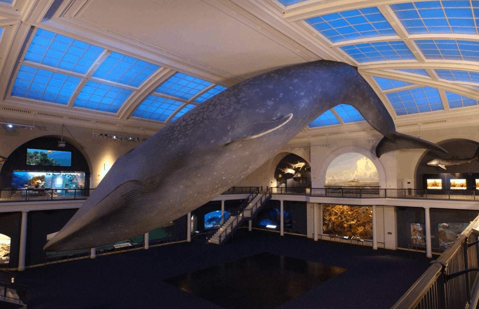 ©American Museum of Natural History / Chesek