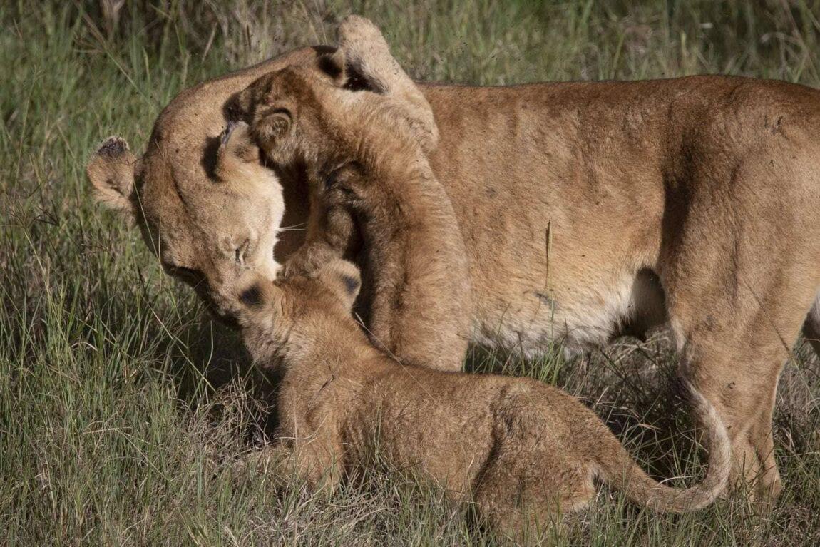 Serengeti Pioneer Camp, Tanzania   Tanzania Family Adventure Holiday