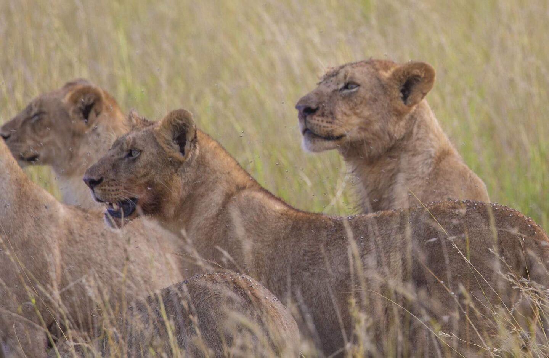 Serengeti Pioneer Camp, Tanzania | Tanzania Family Adventure Holiday