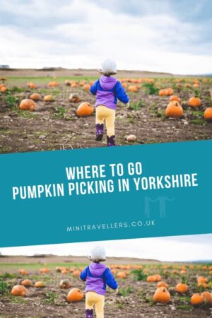 Where to go Pumpkin Picking in Yorkshire