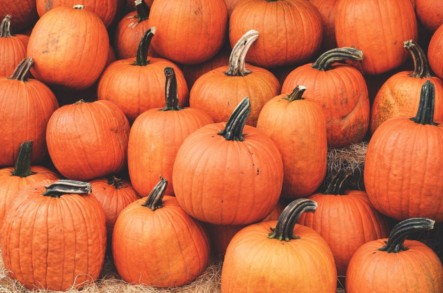 Where to go Pumpkin Picking in the North West | Picking Pumpkins near me