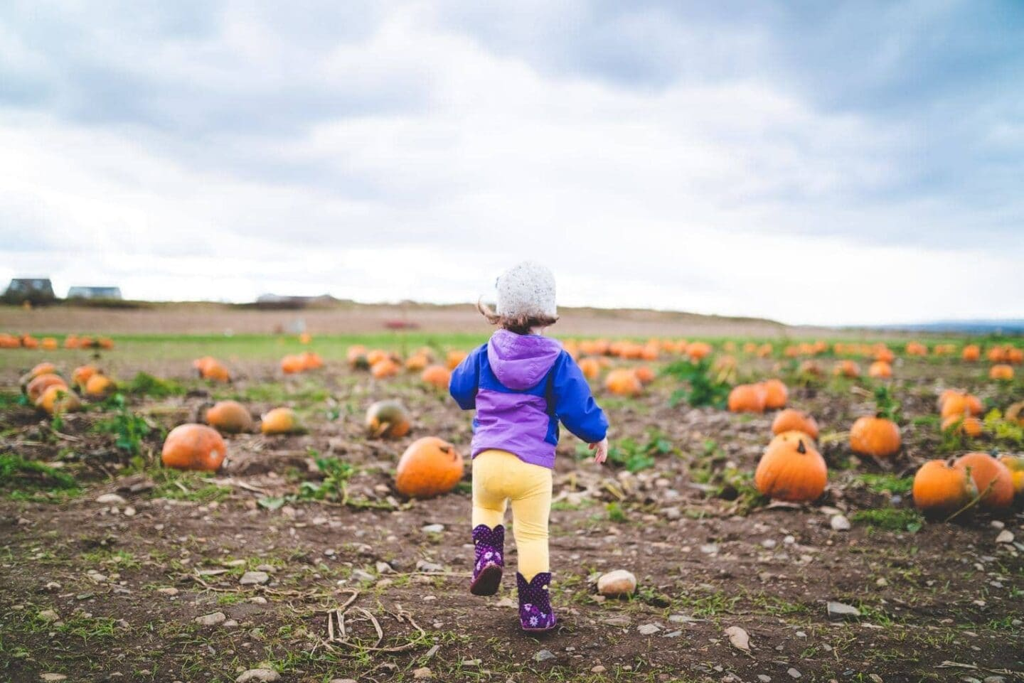 Where to go Pumpkin Picking in the North West