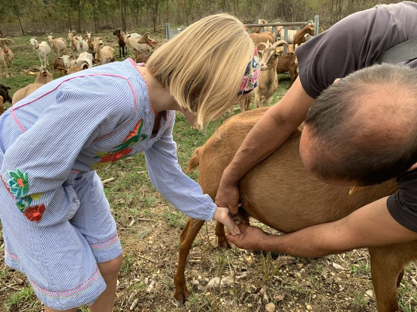 Learning to be a Shepherd in Catalonia | Goat Herding with Kids