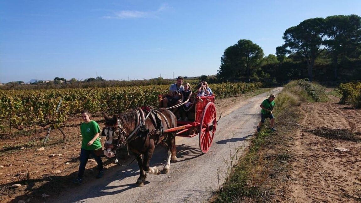 Wine tasting at a Vineyard in Spain with Kids – Adernats Cellar