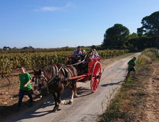 Wine tasting at a Vineyard in Spain with Kids – Adernats Cellar