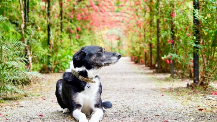Dog friendly UK staycation ideas for 2021