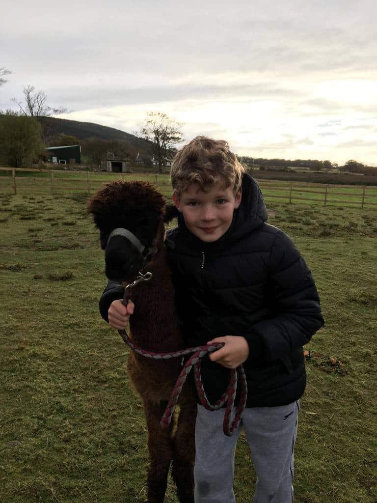 Arran Alpacas at Balmichael